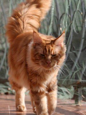 Что рыжий кот приносит в дом? Of Golden Happiness